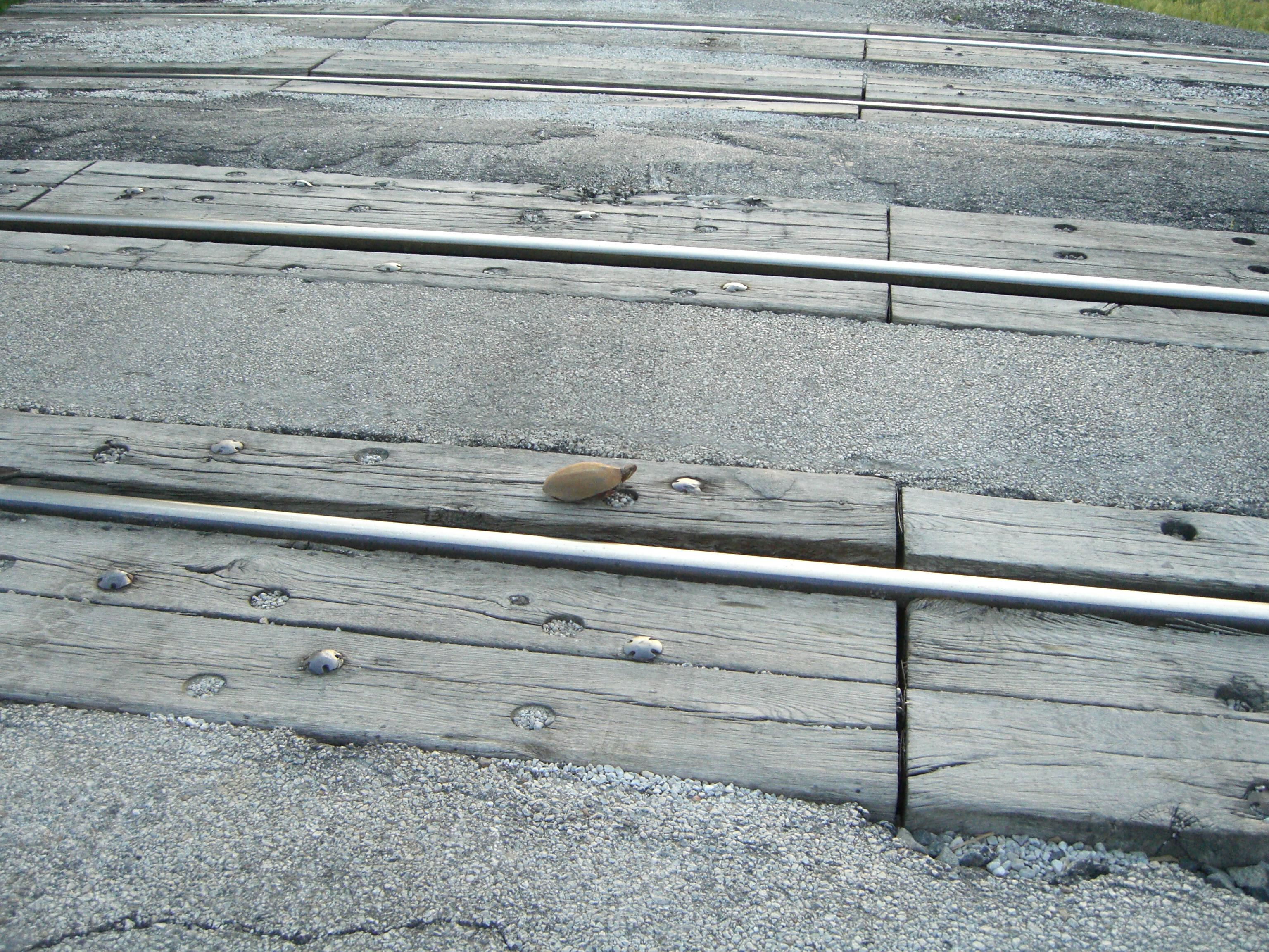 A turtle on train tracks